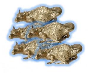 gold rats