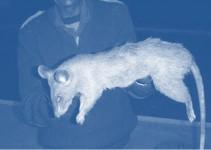 Tehran Overrun With Rats