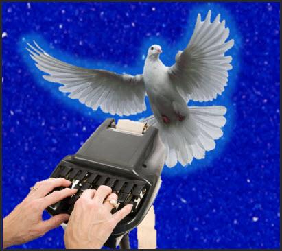 Stenographer_dove